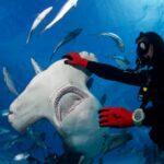 Mergulhadores e Condicionamento Físico